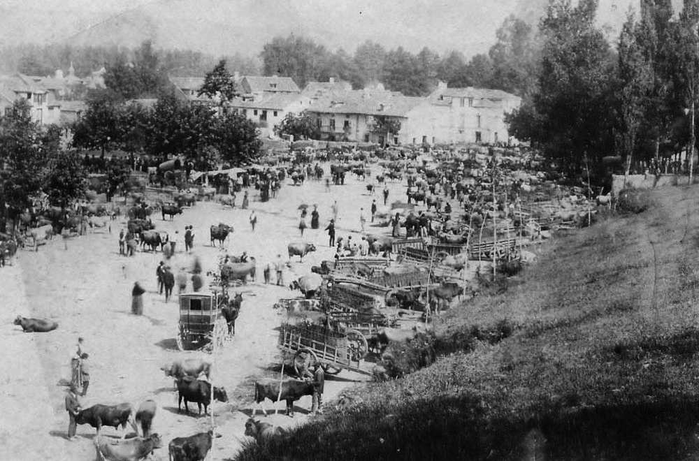 Feria ganadera en Ampuero en 1950.