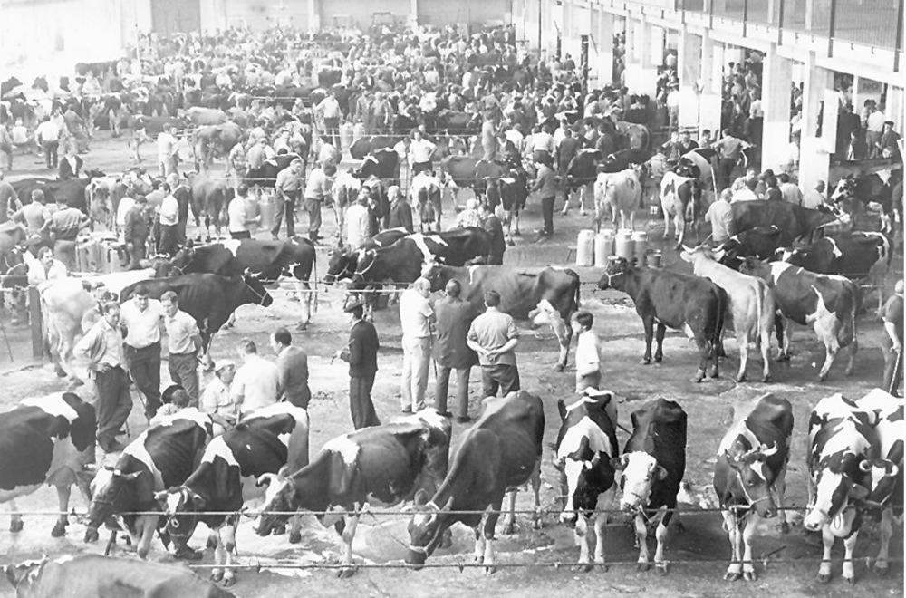 Feria de ganado de Torrelavega en 1995.