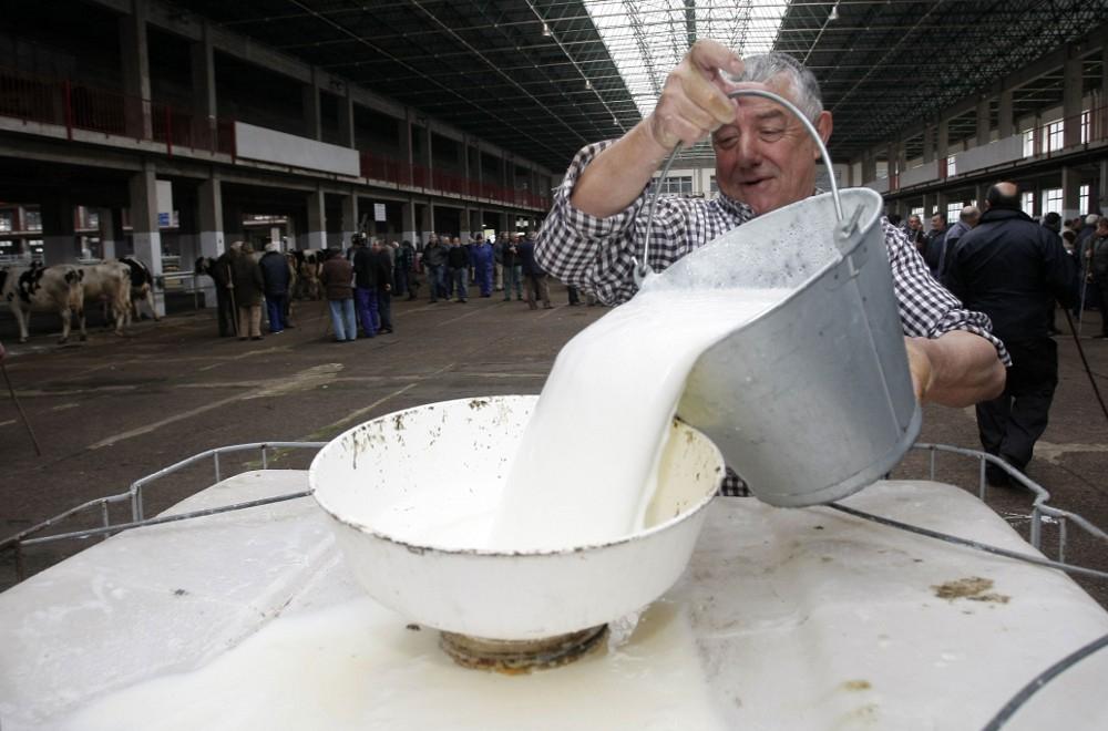 Recogida de leche en el Mercado de Ganado de Torrelavega.