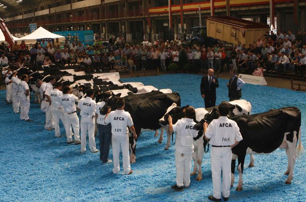 Concurso de Ganado Vacuno de Raza Frisona en el ferial de ganado.